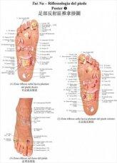2 Poster di Tui Na Riflessologia del Piede