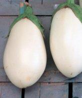B559 - Melanzana White Egg - Bianca a Uovo - 5 gr
