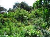 Come Realizzare una Food Forest (Foresta Commestibile)