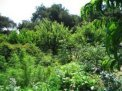 COME REALIZZARE UNA FOOD FOREST (Foresta Commestibile)