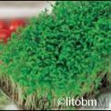 Crescione Comune 50 gr - B583
