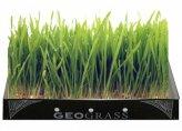 Geograss Kit per Erba di Grano - Frumento Duro