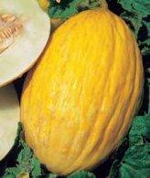 Melone Rugoso di Cosenza Giallo 10 gr.