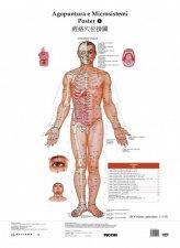 Poster Agopuntura e Microsistemi 1-2-3-4-5