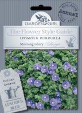 Semi di Ipomoea Purpurea - Morning Glory Heringa
