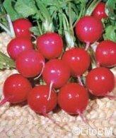 Semi di Ravanello Saxa 2 - 25 Gr