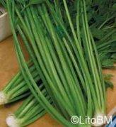 Semi di Sedano Verde da Taglio - 10 Gr