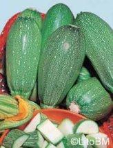 Semi di Zucchino Bolognese - 25 Gr
