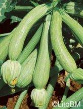 Semi di Zucchino Genovese - 25 Gr