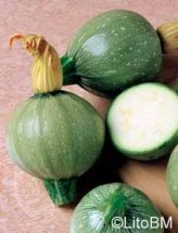 Semi di Zucchino Tondo Chiaro Di Nizza - 25 Gr
