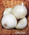 Cipolla Bianca Tonda Musona - 25 gr - B573